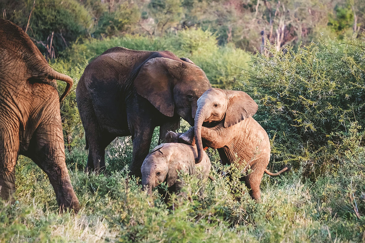 Baby Elephants Playing in South Africa - 5 Star South Africa Safari