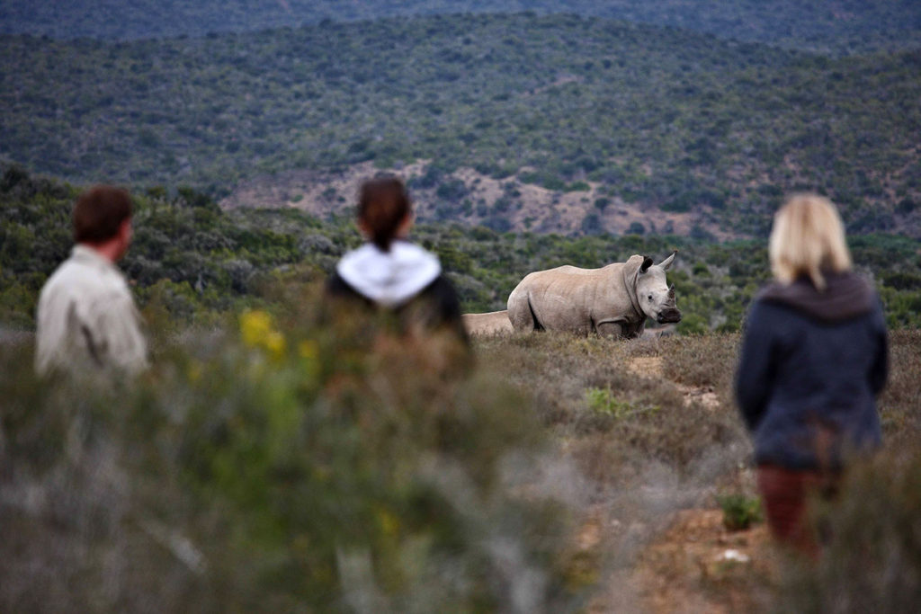Rhino Seen on Walking Safari in Kwandwe - Luxury South Africa Safari Experiences