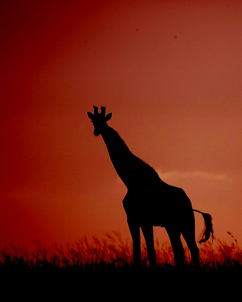Best South Africa Safaris & Tours - Africa Endeavours Travel Agency
