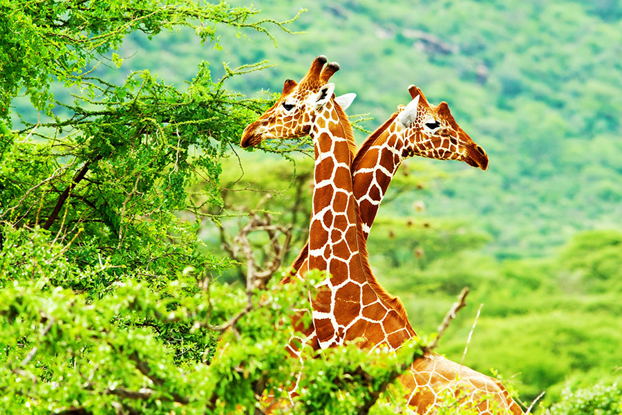 Africa Endeavours - Best Africa Travel Agents