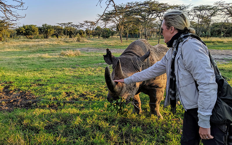 Petting a Rhino at Ol Pejeta Rhino Conservancy, Kenya